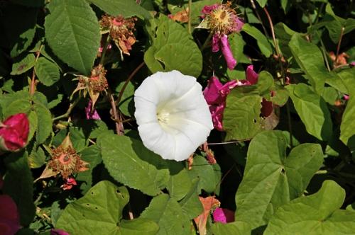 nature,fleurs,jardin,78
