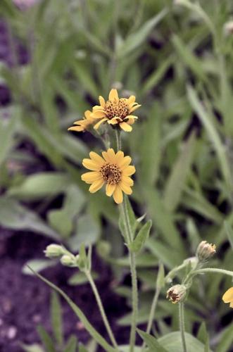 nature,fleurs,plantes,herbier