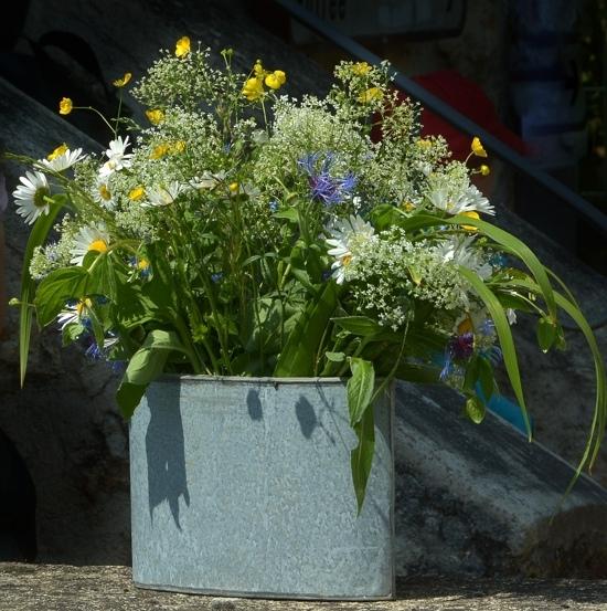 fleurs des champs.jpg