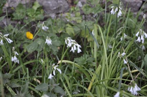 fleurs,plantes,nature,herbier