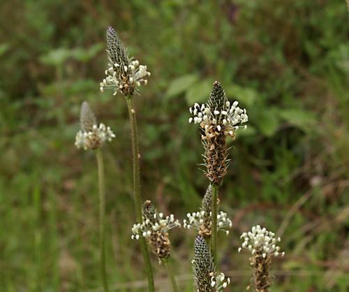 nature,herbes sauvages,fleurs,photos