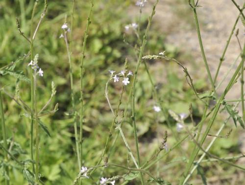 nature,fleurs,herbier,photos