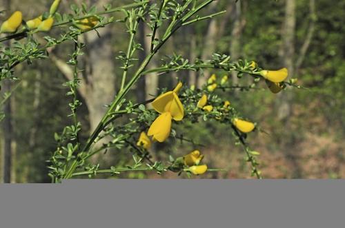 nature,herbier,fleurs,photos