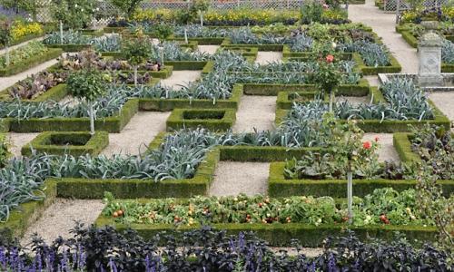 nature,plantes,poireaux,photos