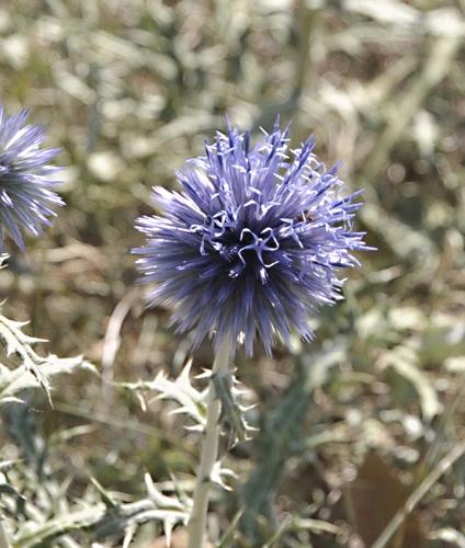 nature,plantes,fleurs,herbier,photos