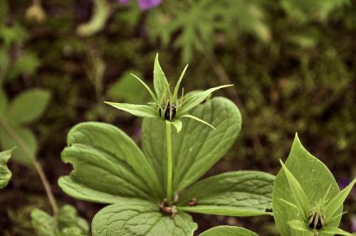 nature,plantes,baies,herbier