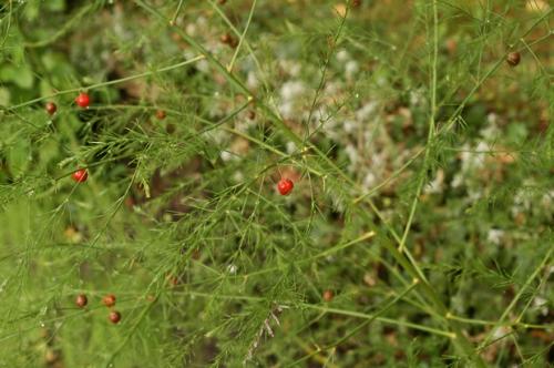 nature,baies sauvages,senlisse,photos