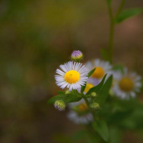 fleurs-d'automne.jpg