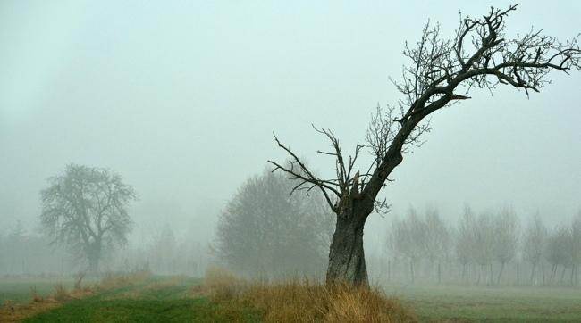 277821brouillard.jpg
