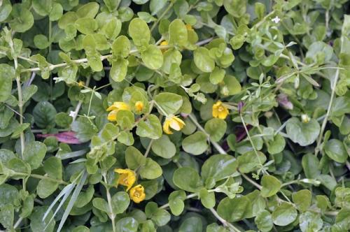 plantes,nature,fleurs,herbier