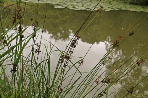 nature,plantes,senlisse,photos