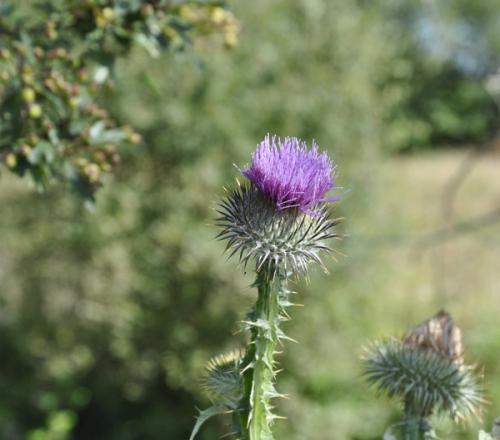 plantes,fleurs,herbier,nature