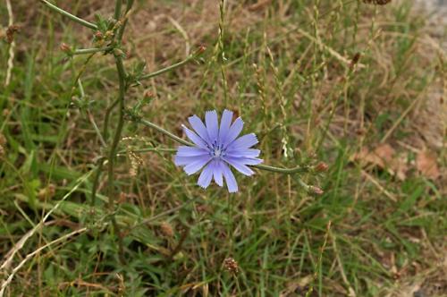 nature,fleurs,78,photos