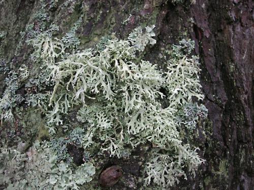 nature,champignons,algues,photos