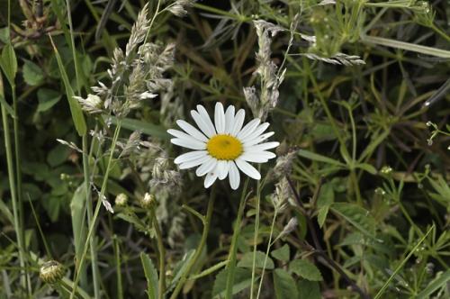 nature,fleurs,photos,herbier