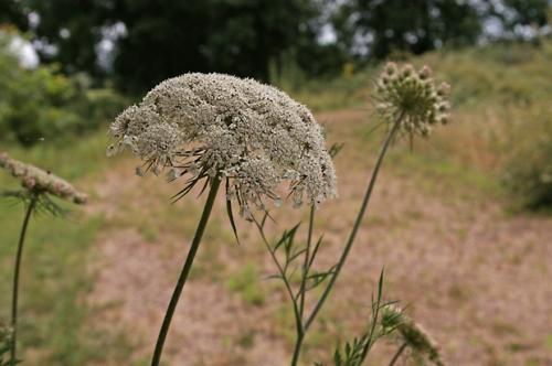 nature,fleurs,herbier,78,photos