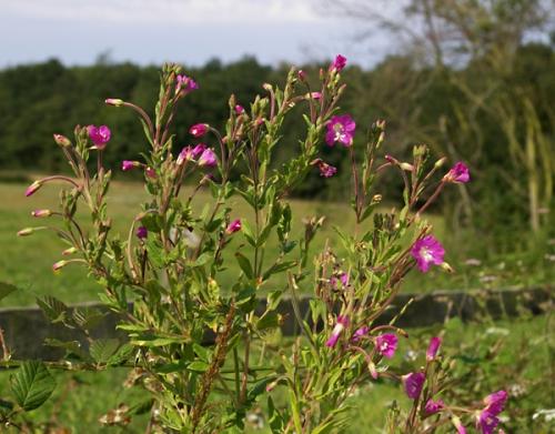 nature,plantes,fleurs,photos