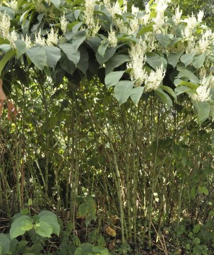 nature,fleurs,plantes,herbier,ohotos