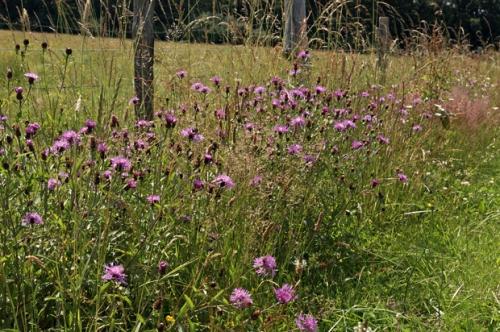 nature,fleurs,photos