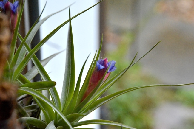 plante épiphyte.jpg