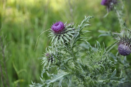 nature,fleurs,plantes,photos,herbier