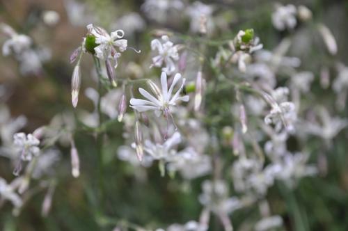 nature,fleurs sauvages,plantes,herbier