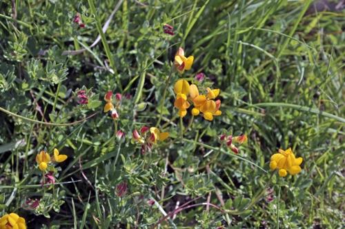 nature,plantes,fleurs,herbier